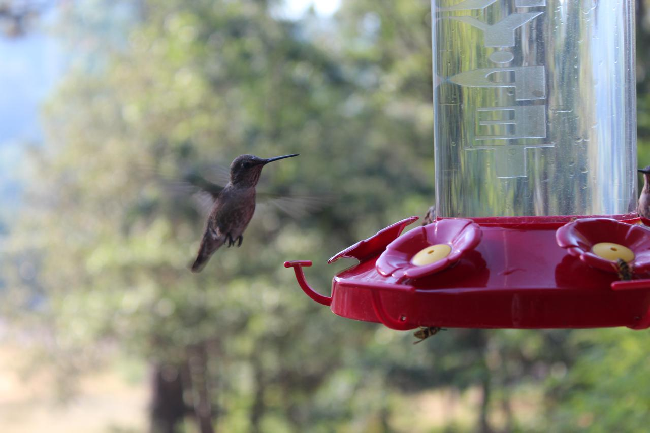 Day 7. Hummingbird Sanctuary